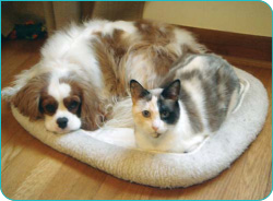 A cat and dog on bedding